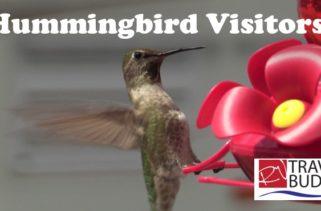 RV Travel Buddy Hummingbird Visitors 2